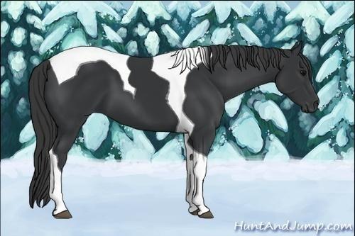 Horse Color:Black Tobiano