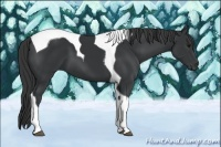 Horse Color:Black Tobiano