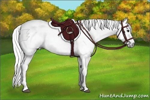 Horse Color:Gray Roan Splash