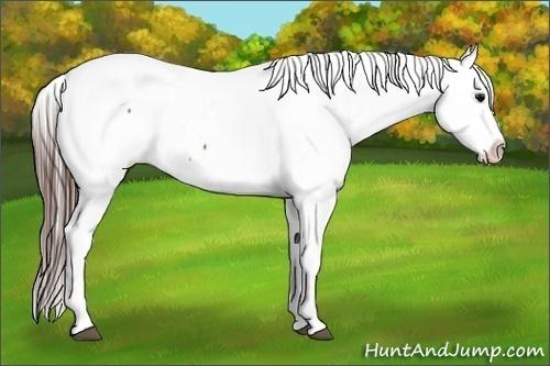 Horse Color:Brown Appaloosa