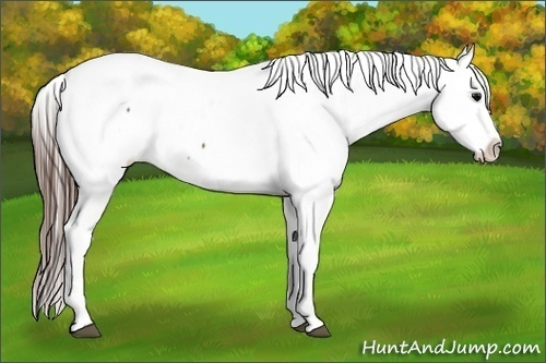 Horse Color:Brown Appaloosa