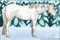 Horse Color:Smokey Creme Roan Tobiano