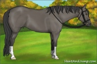 Horse Color:Smokey Grullo