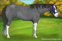 Horse Color:Smokey Blue Roan Splash