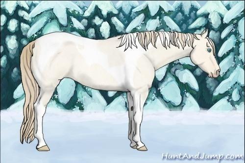 Horse Color:Perlino Roan Dun Tobiano
