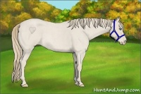 Horse Color:Smokey Creme Roan