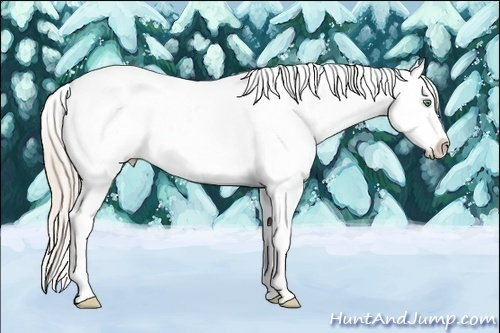 Horse Color:Gold Cream Champagne Roan Dun Splash Tobiano Appaloosa