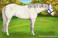 Horse Color:Smokey Creme Dun