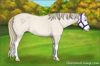 Horse Color:Perlino Roan Splash