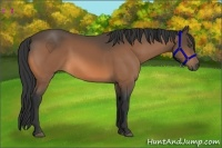 Horse Color:Buckskin