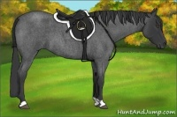 Horse Color:Blue Roan