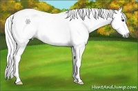 Horse Color:Gray Roan Splash Tobiano