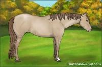 Horse Color:Grullo Pearl
