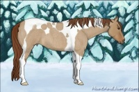 Horse Color:Red Dun Roan Tobiano