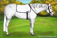 Horse Color:Gray Roan Splash
