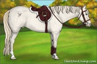 Horse Color:Perlino Roan