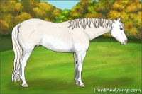 Horse Color:Perlino Roan Splash