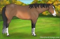 Horse Color:Buckskin Splash