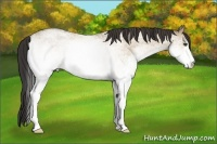 Horse Color:White Spotted Buckskin Roan Dun