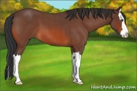 Horse Color:Bay Roan Splash