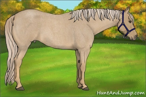 Horse Color:Palomino Roan