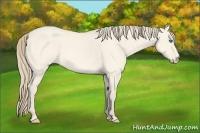 Horse Color:Perlino Roan Dun