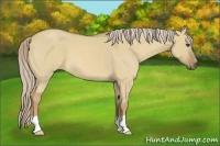 Horse Color:Palomino Roan Dun