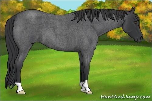 Horse Color:Blue Roan
