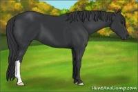 Horse Color:Black