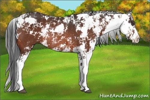 Horse Color:Bay Sabino Rabicano