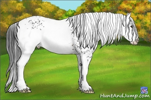 Horse Color:White Spotted Brown Rabicano