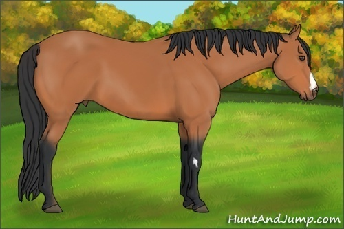Horse Color:Bay Frame