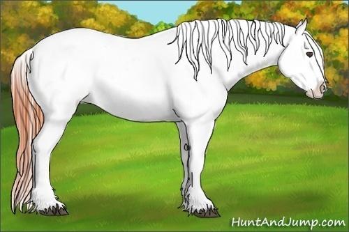 Horse Color:Bay Appaloosa Rabicano