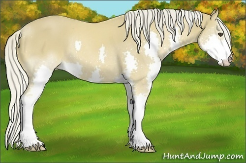 Horse Color:Palomino Splash