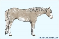 Horse Color:Silver Smokey Grullo Ice Sabino Splash