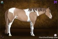 Horse Color:Black Pearl Sabino Tobiano