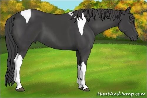 Horse Color:Smokey Black Tobiano