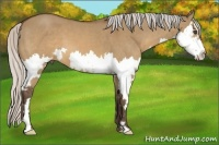 Horse Color:Silver Brown Dun Sabino Splash Frame