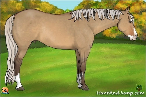 Horse Color:Silver Brown Dun Splash Frame Rabicano