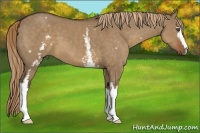 Horse Color:White Spotted Liver Red Dun