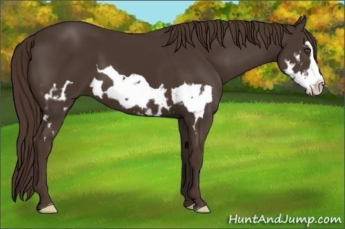 Horse Color:Liver Chestnut Splash Frame