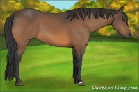 Horse Color:Buckskin