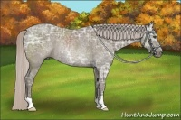 Horse Color:Silver Grullo Ice Rabicano