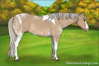 Horse Color:Silver Bay Ice Dun Sabino Splash Tobiano Frame
