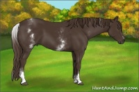 Horse Color:White Spotted Liver Chestnut Sabino