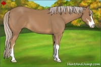 Horse Color:Palomino Sabino