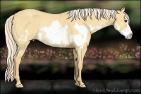 Horse Color:Palomino Roan Dun Splash Frame Rabicano