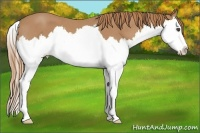 Horse Color:Red Roan Splash