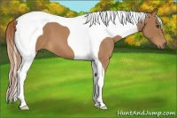 Horse Color:Red Roan Tobiano