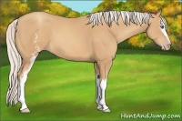 Horse Color:White Spotted Silver Amber Champagne